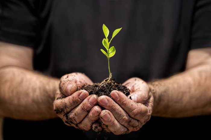 A man cupping a seedling growing in soil in his hands.