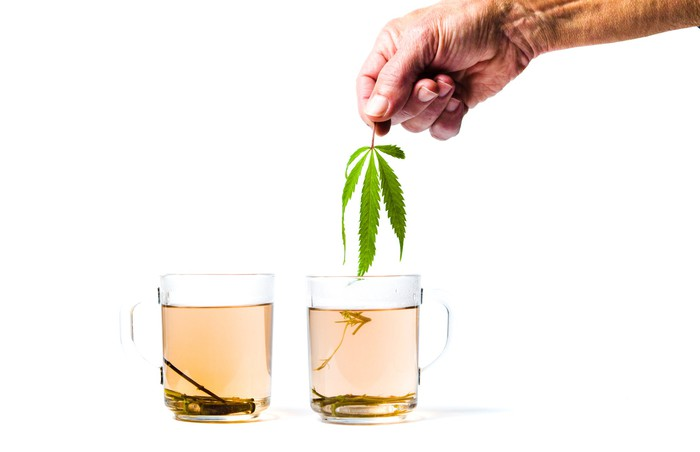 A man's hand holding a cannabis leaf above two cups of tea from the same plant.