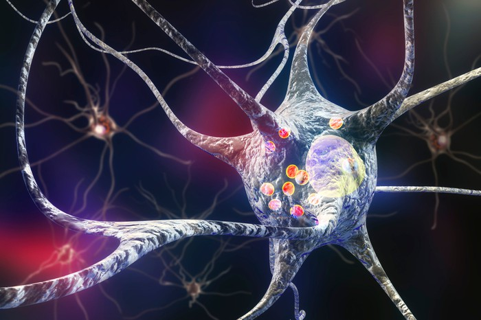 A neuron in action.