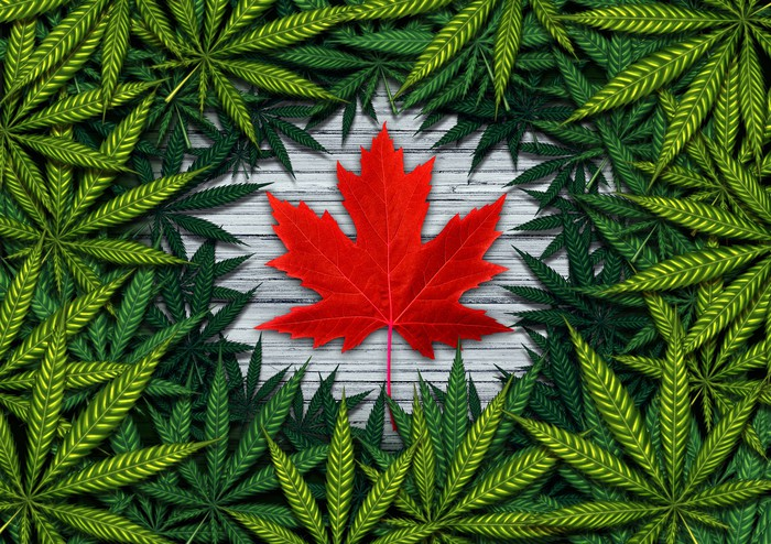 Red Canadian maple leaf surrounded by marijuana leaves.