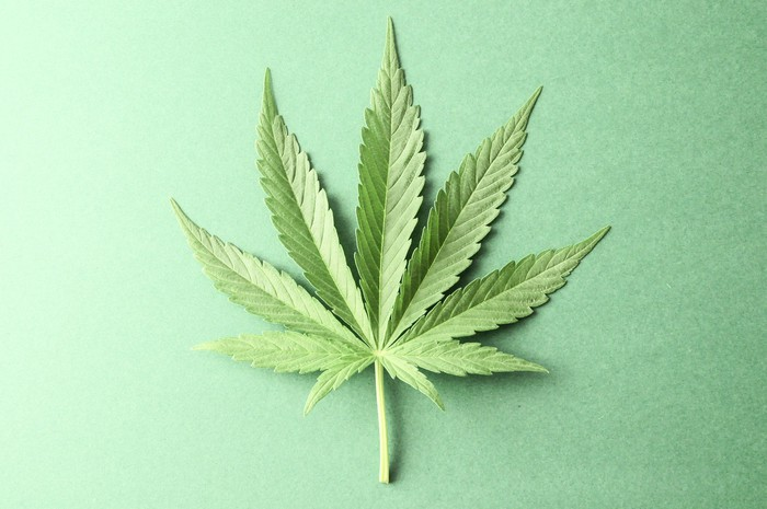 A marijuana leaf on a green background.