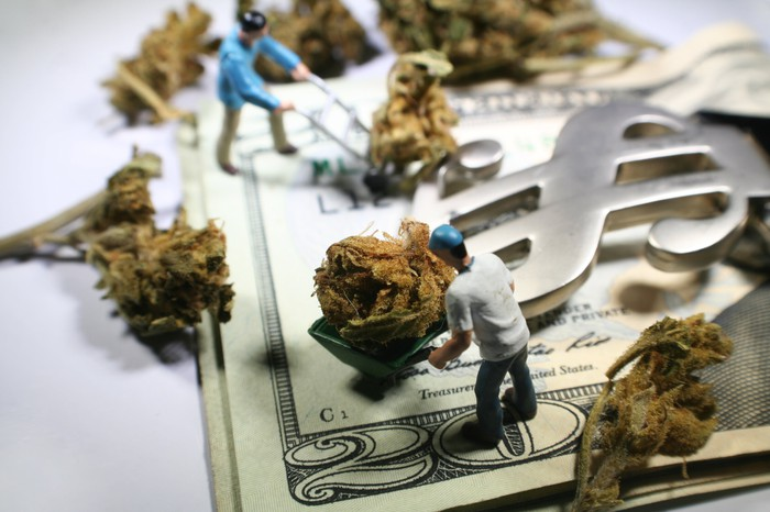 Tiny figures pushing wheelbarrows with marijuana buds on top of 20 dollar bills in a dollar sign money clip