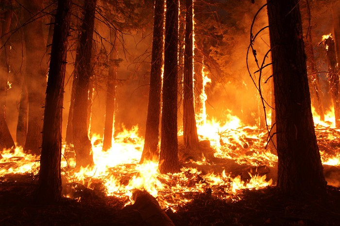 Wildfire burning a forest.