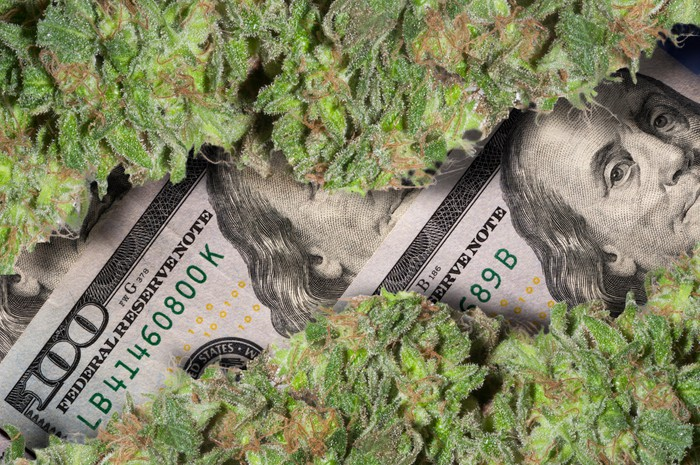 Two rows of trimmed cannabis buds lined up atop a a small pile of hundred dollar bills.