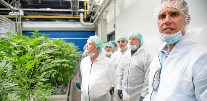 Group of people wearing white coats and surgical masks in front of a stand of cannabis plants.
