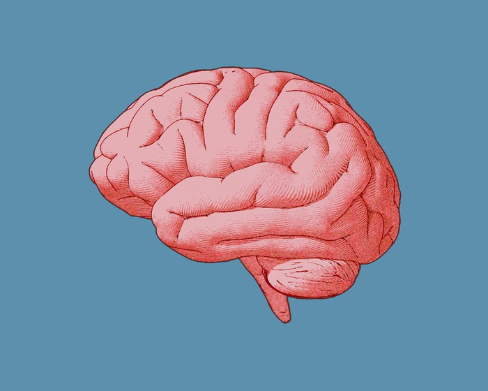 Pink brain image against blue background.