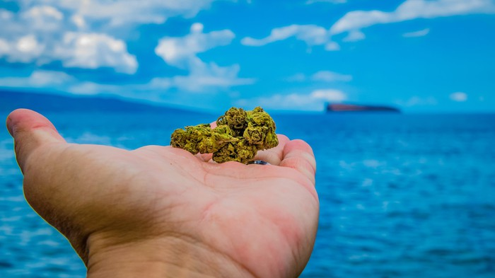 Marijuana buds held in a hand extended toward the ocean.