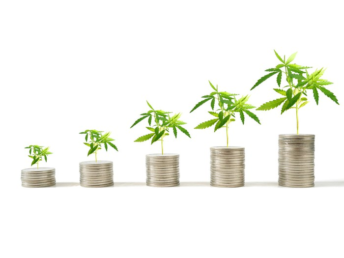 Marijuana plants grow on top of a row of increasingly taller stacks of coins.