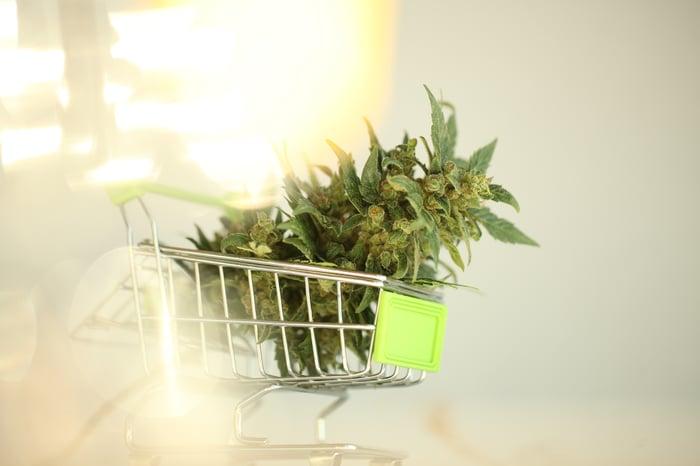 Marijuana flower in a tiny toy shopping cart.