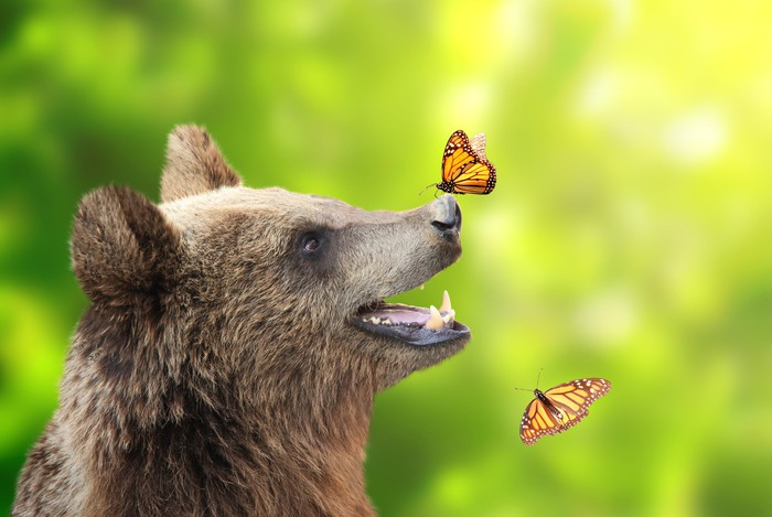 Bear with a butterfly on its nose.