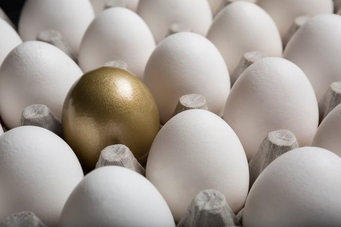 One golden egg in a carton of white eggs.