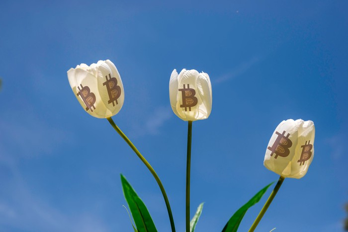 Three white tulip flowers bearing Bitcoin symbols on the petals.