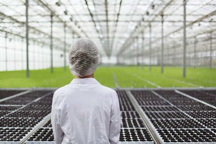 Person wearing hairnet and white lab coat looking at a greenhouse with cannabis seedlings growing.