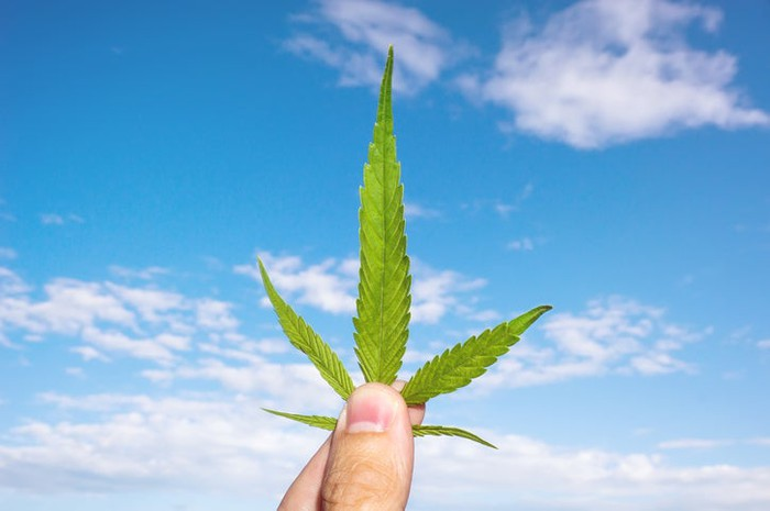 Marijuana leaf held at he base by a person's fingers with a blue sky and white clouds in background.