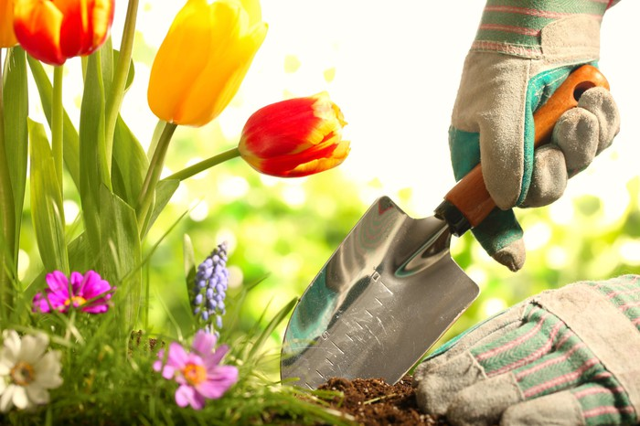 Two gloved hands and a hand shovel dig into a garden to plant flowers.