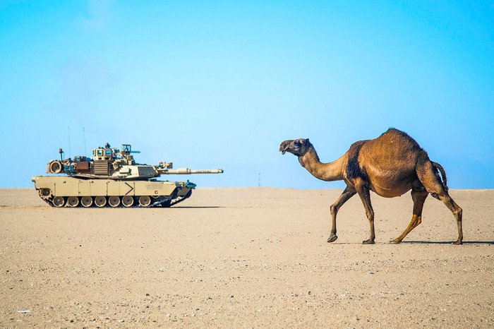 M1A2 Abrams tank and a camel in the desert
