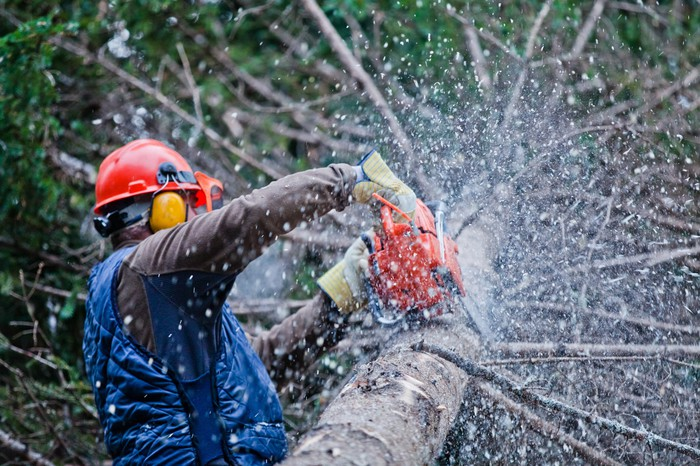 Man chainsawing a tree