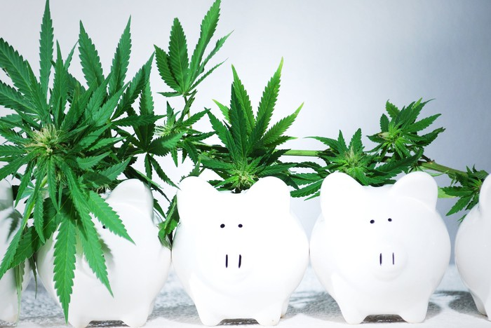 Cannabis plants in decreasing size growing out of white piggy banks lined up in a row.