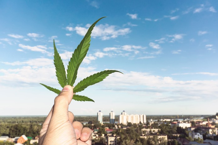 A hand holding a marijuana leaf against the backdrop of a city in the distance.