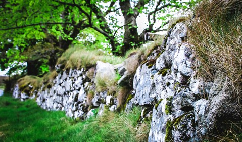 A crumbling garden wall with lush grass and a tree