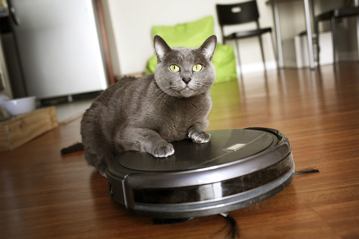 A gray cat with its paws on a robotic vacuum cleaner