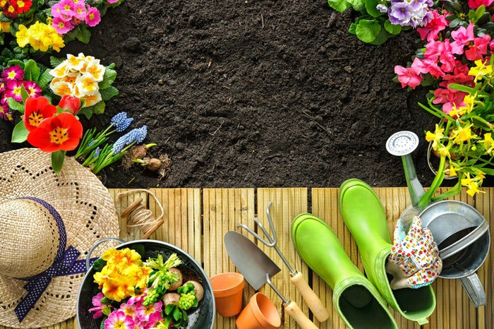 Various gardening tools and flowers on top of soil.