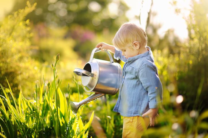 A toddler watering a garden.