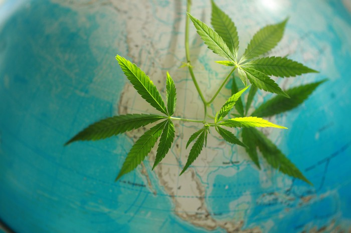 Cannabis leaves draped over a globe, covering North America.