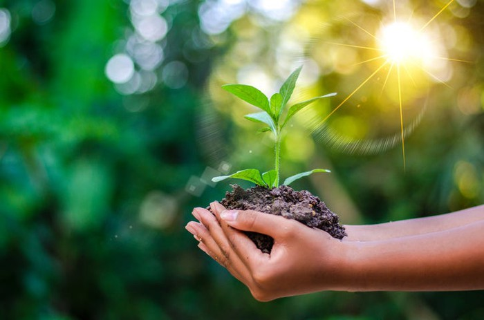 Hands holding a plant seedling in soil.