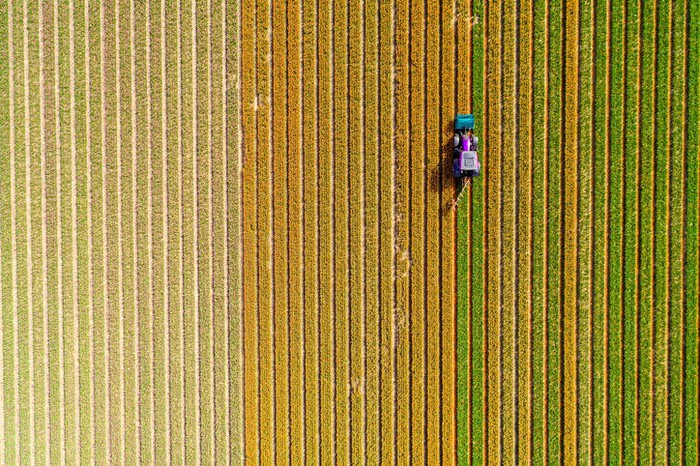 A bird's eye view of a combine in a field.