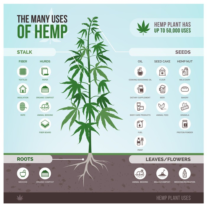 Hemp vs  Marijuana: What's the Difference? | The Motley Fool