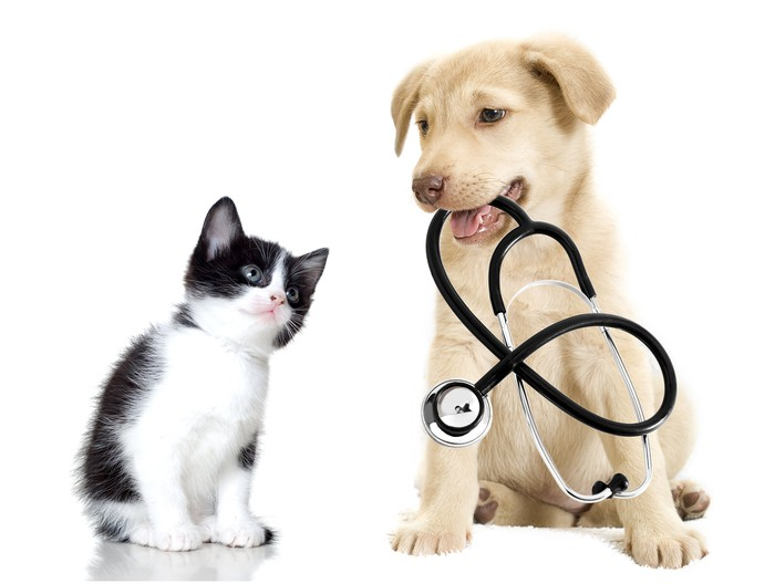 Kitten and puppy holding a stethoscope