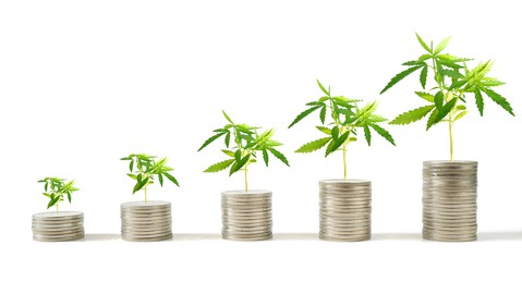 marijuana growing out of coins ascending in a row