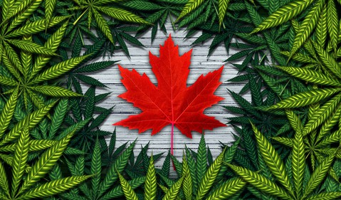 Marijuana leaves surrounding red Canadian maple leaf