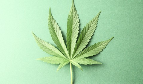 marijuana leaf on green background