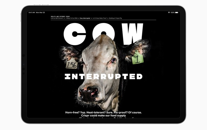 Apple News displaying a Wired story about cows on an iPad