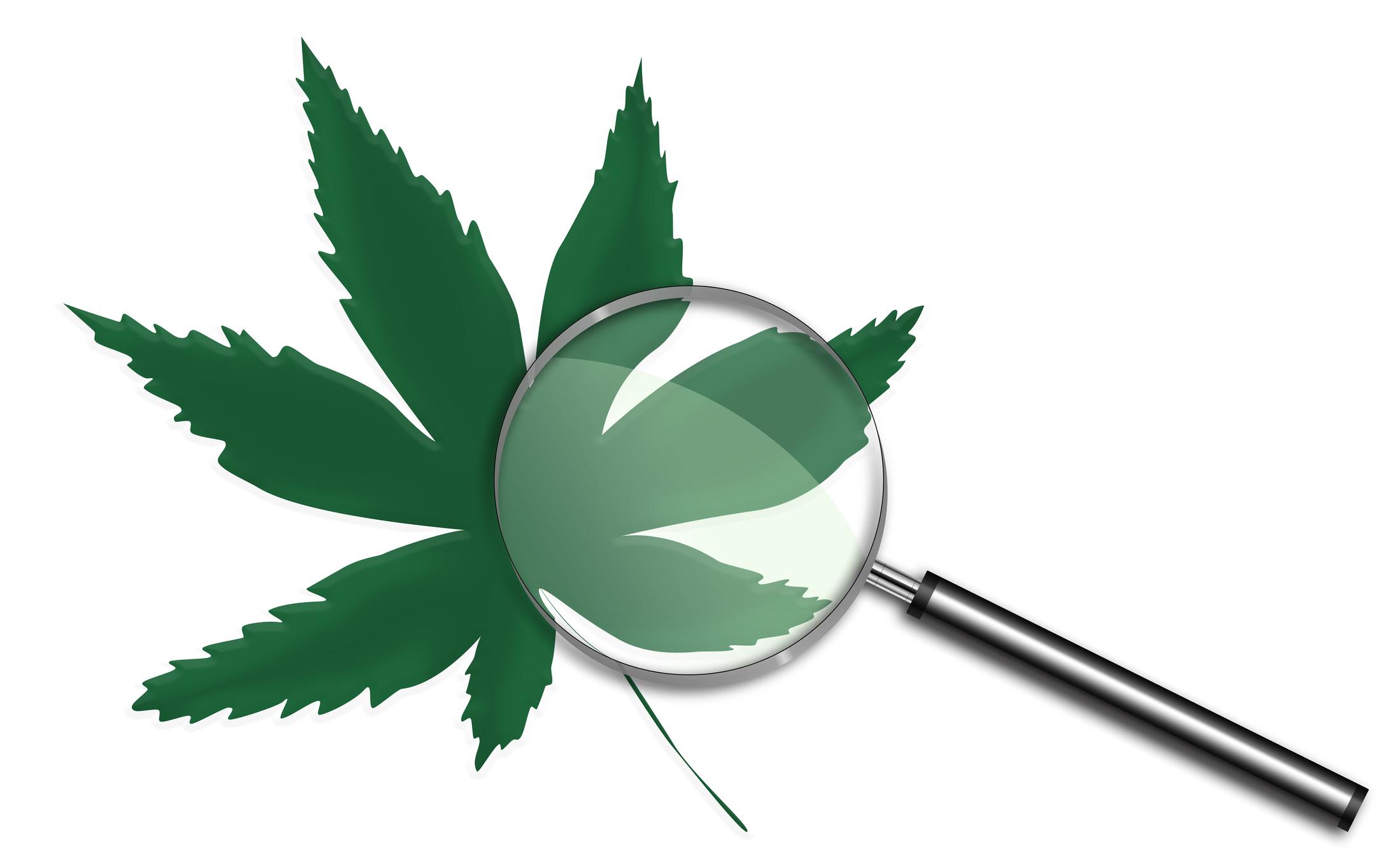 Magnifying glass on top of marijuana leaf