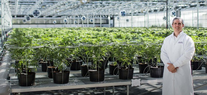 Person in white lab coat in front of greenhouse full of cannabis plants.