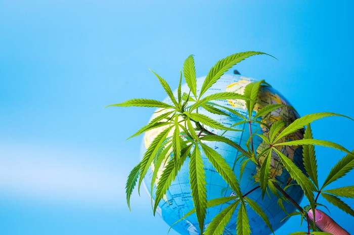 A finger with pink nail polish holding cannabis leaves in front of a globe of the Earth.
