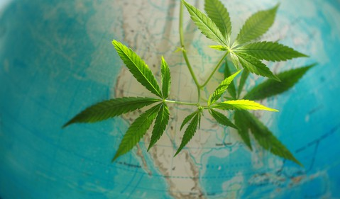 Marijuana with globe in background
