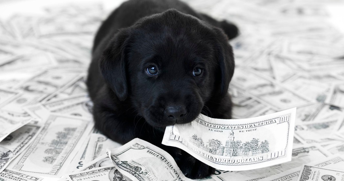 How to Prevent a Sick Pet From Derailing Your Finances