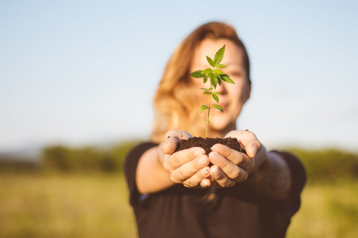 A woman holding a cannabis plant with soil in her outstretched cupped hands.