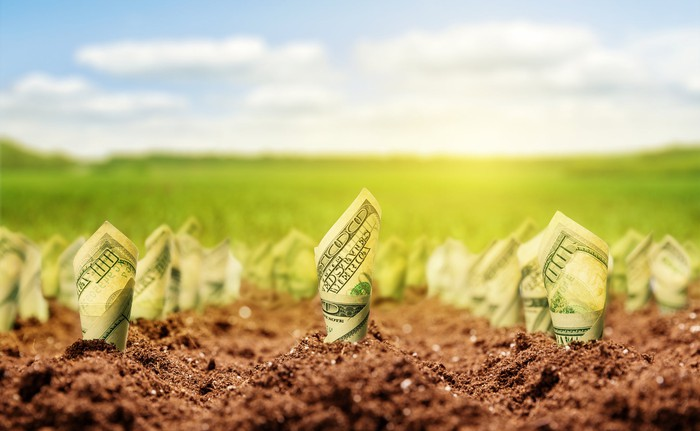 One hundred dollar bills growing from the soil in a green field.