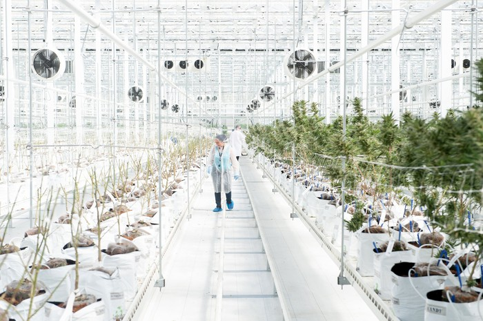Hexo employees in the company's grow facility.