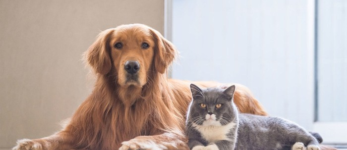 A dog and a cat looking at the camera.