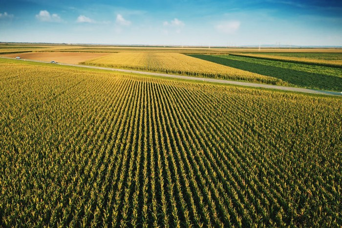 An aerial view of a corn field during the day.