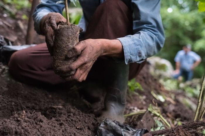A farmer works on planting a tree.