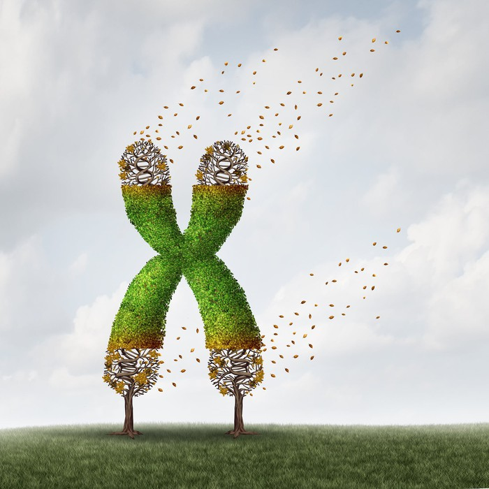 Stylized image of two trees intertwined to form an X chromosome, which appears to be blowing away in the wind