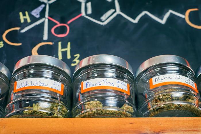 Three jars of dried cannabis flowers sitting on a ledge against a blackboard.