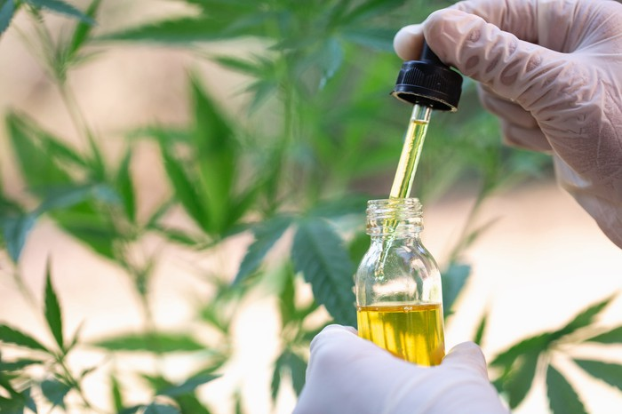Two gloved hands holding a full vial and dropper of cannabidiol oil in front of a hemp plant.